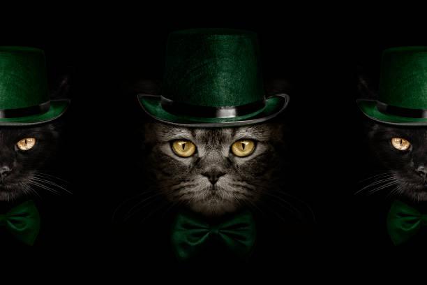 dunkle maulkorb katze im grünen hut und krawatte schmetterling - katze zeichnen stock-fotos und bilder