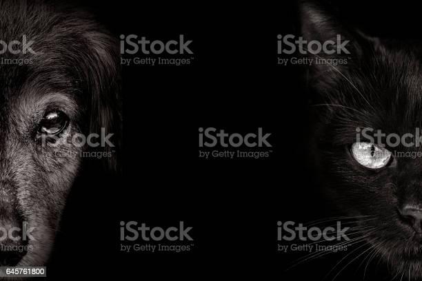 Dark muzzle spaniel dog and cat closeup front view picture id645761800?b=1&k=6&m=645761800&s=612x612&h=tyi9jhgfk5csigb2oqvnkrdvmxxavns8d8dbbmow yc=