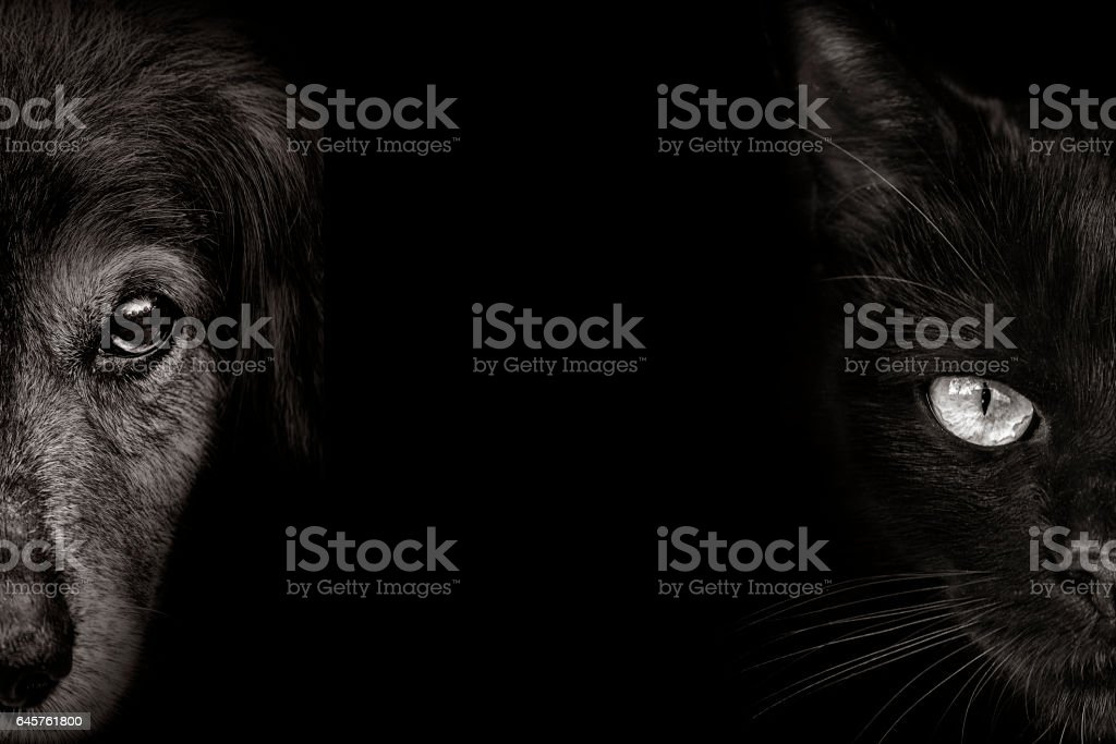 dark muzzle spaniel dog and cat  closeup. front view stock photo