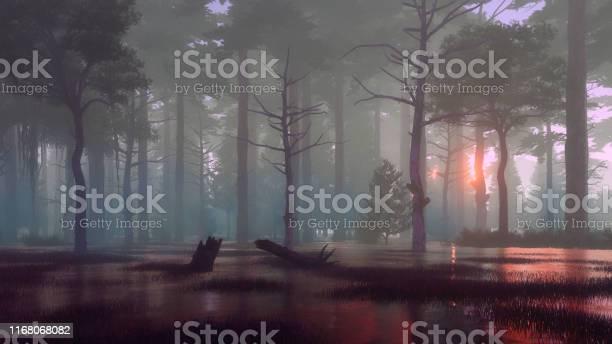 Photo of Dark mystical forest swamp at foggy dawn or dusk