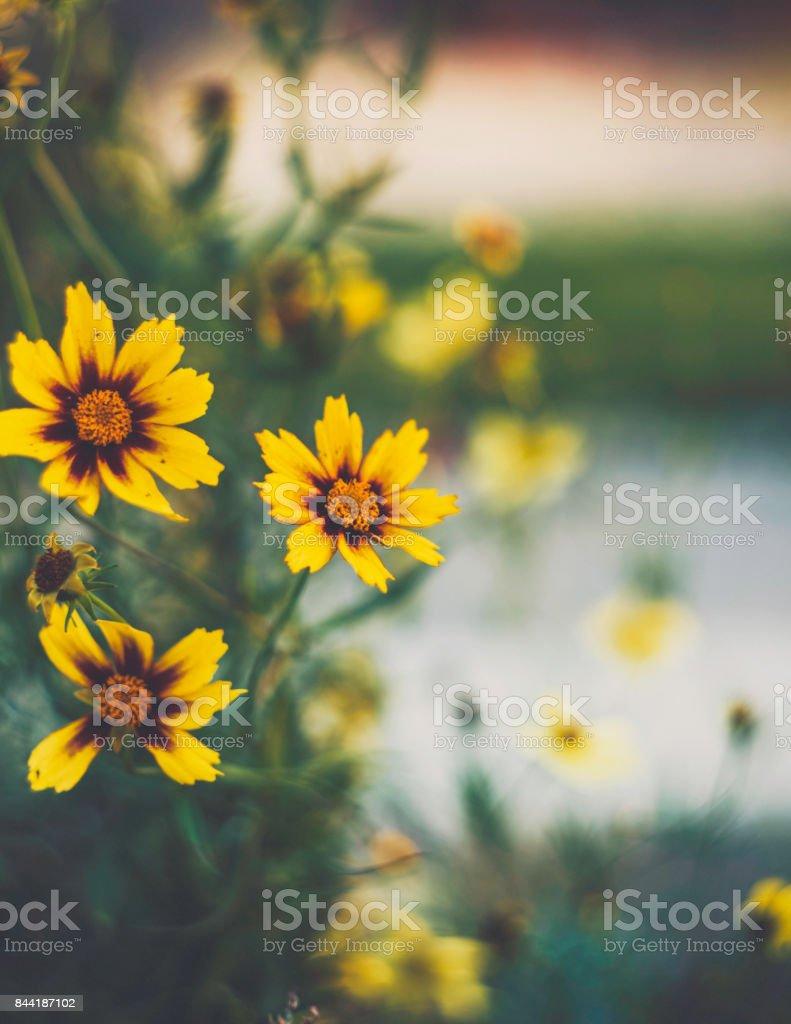 Dark Nature Beautiful Wildflowers At Dusk Flower Immersion Stock