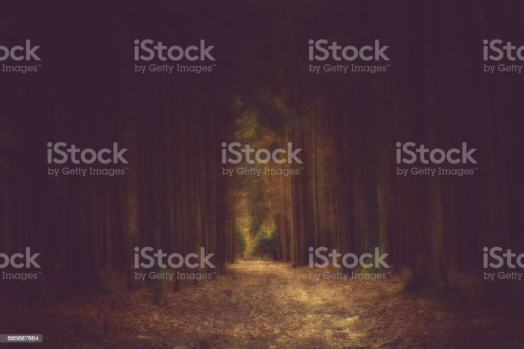 Dark path in the forrest into the light foto de stock royalty-free