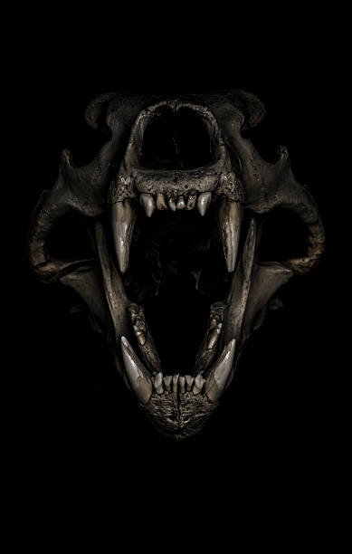 dark polar bear skull stock photo
