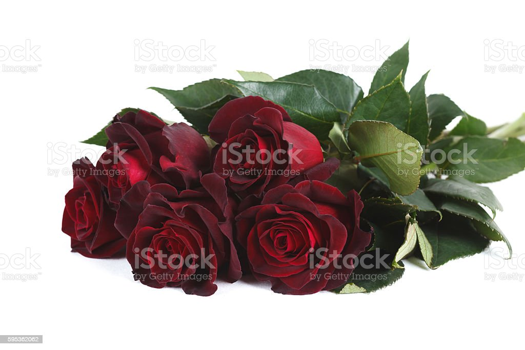 Dark Red Black Baccara Roses Isolated On White Background Stock