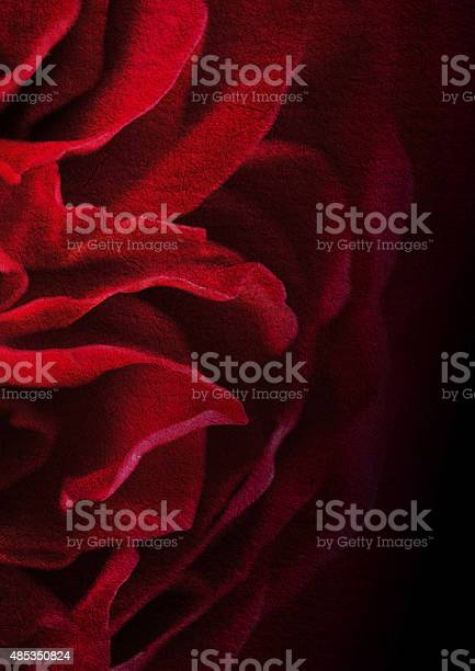 Dark red petal rose on mulberry paper texture background picture id485350824?b=1&k=6&m=485350824&s=612x612&h=84jjbyciapagclshqgma4udzs7levt4okshc6mwcmb4=