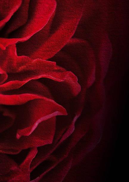 Dunkel rote Rosenblätter rose auf mulberry Papier Textur-Hintergrund – Foto