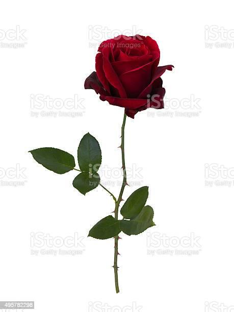 Dark red rose picture id495782298?b=1&k=6&m=495782298&s=612x612&h=zhirzg9 9pzpv0yuadp419eyizv9xxybyyefaefif1s=