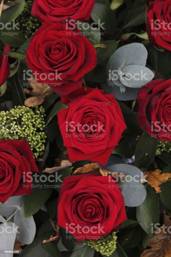 Dark red roses royalty-free stock photo