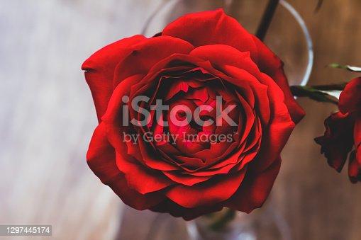 Dark red rose in glass vase. Birthday flowers bouquet top view, soft focus