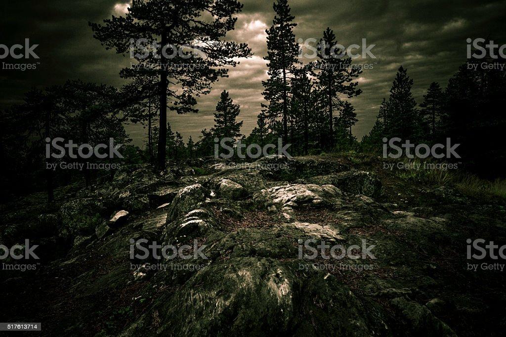 Dark rocky forest stock photo
