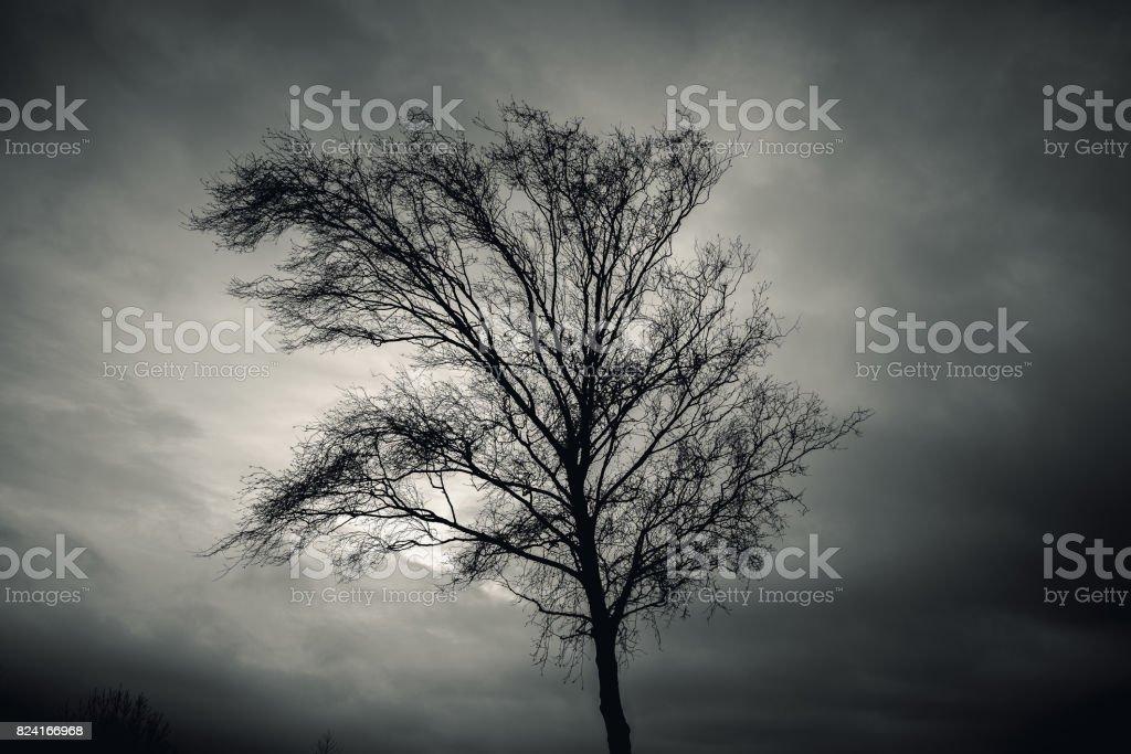 Dark silhouette of bare tree over dramatic sky stock photo