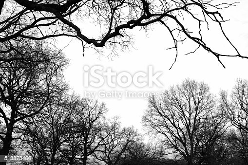Dark silhouette of naked trees in winter, with bright sky. Black and white photography. High contrast image with dry branches creating dark and black patterns on a white background, with an abstract landscape effect.
