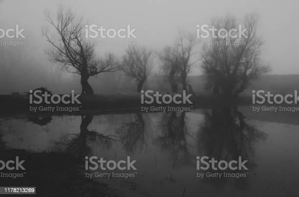Photo of Dark spooky landscape