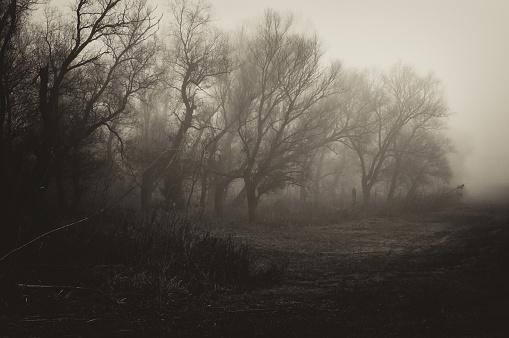 Dark spooky winter landscape