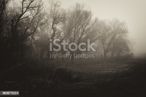 Spooky landscape showing forest on a misty winter day.