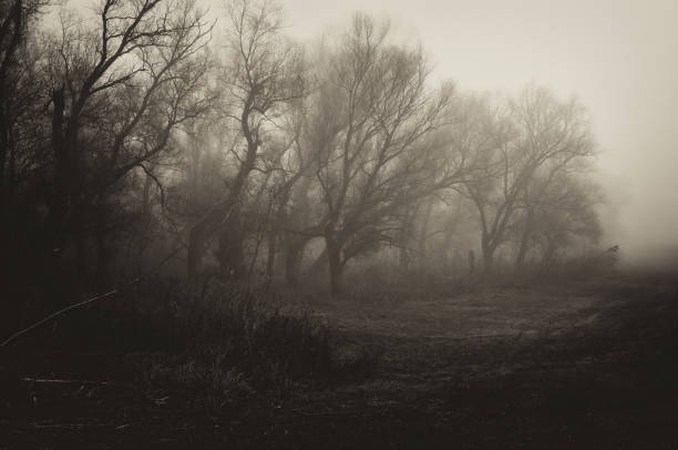 Dark spooky winter landscape stock photo