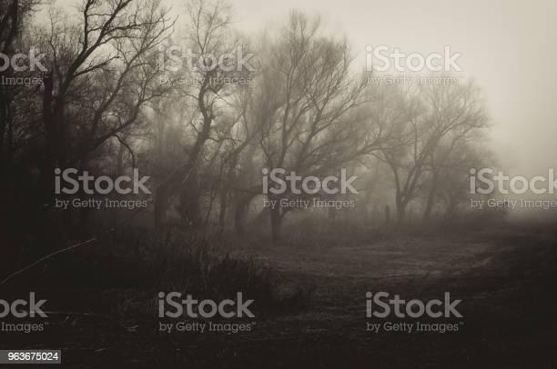 Photo of Dark spooky winter landscape