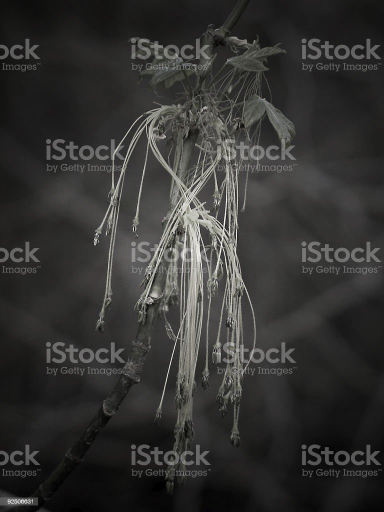 Dark Sprouts on tree royalty-free stock photo