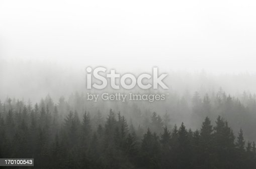 Dark Spruce Wood Silhouette Surrounded by Fog on white.