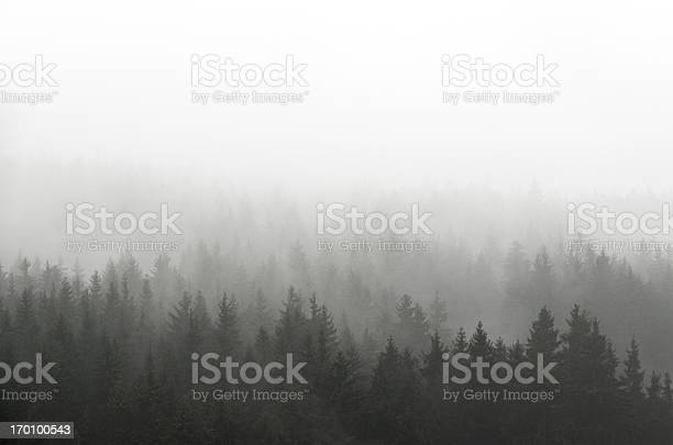 Photo of Dark Spruce Wood Silhouette Surrounded by Fog on white.
