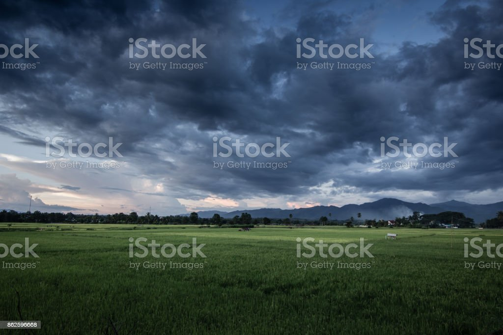 Dark stormy clouds over rice field. stock photo