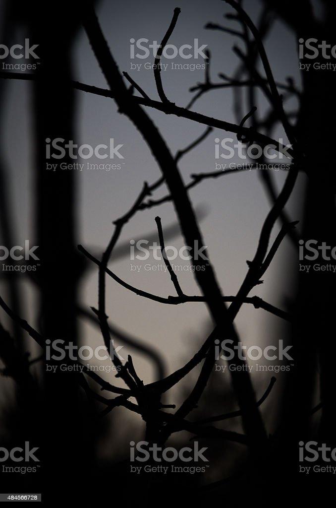 Dark tree branches. stock photo