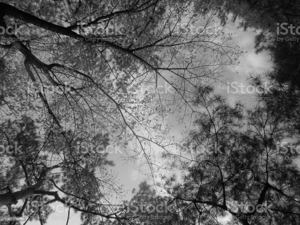 어둡습니다 나무 스톡 사진