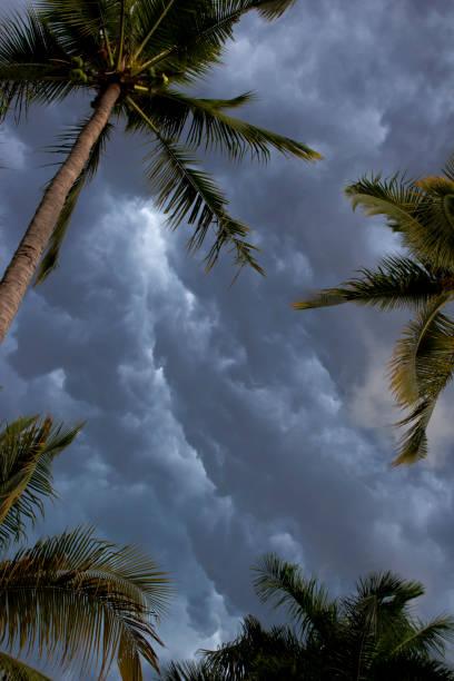 Dark Tropical Clouds