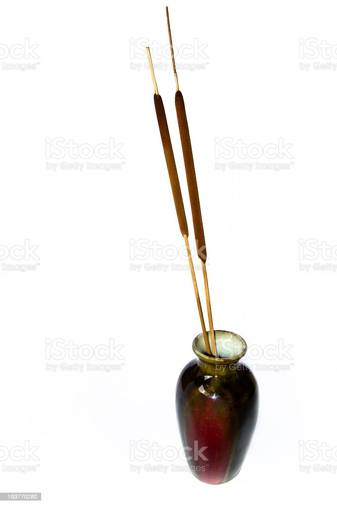 Dark vase with two cattail rhizomes stock photo