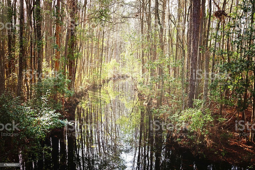 Dark waters river in Southern USA swamp stock photo