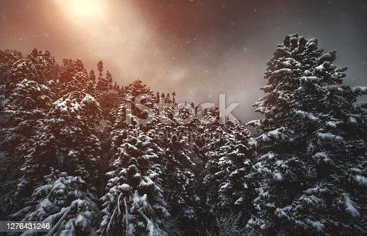Dark dense pine forest in fog. Winter season