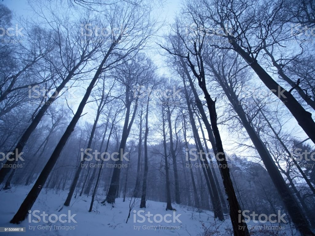 dark winter forest on hill tree at the mountain peak stock photo