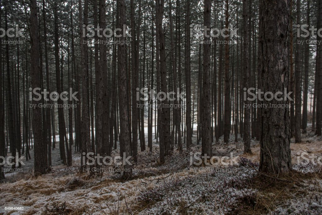 dark winter forest stock photo more pictures of autumn istock