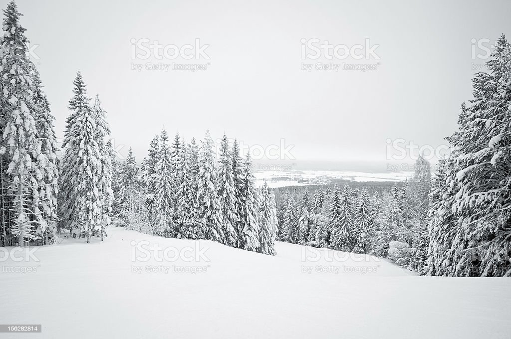 Dark winter landscape with snow covered trees stock photo