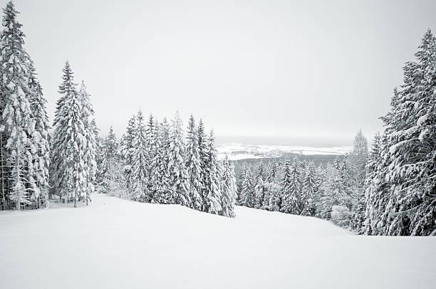 dark winter landscape with snow covered trees - pine forest sweden bildbanksfoton och bilder