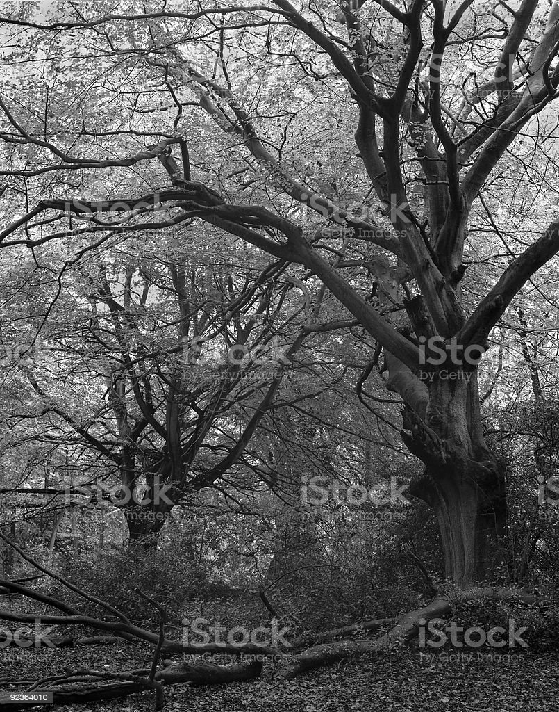 Dark wood. royalty-free stock photo