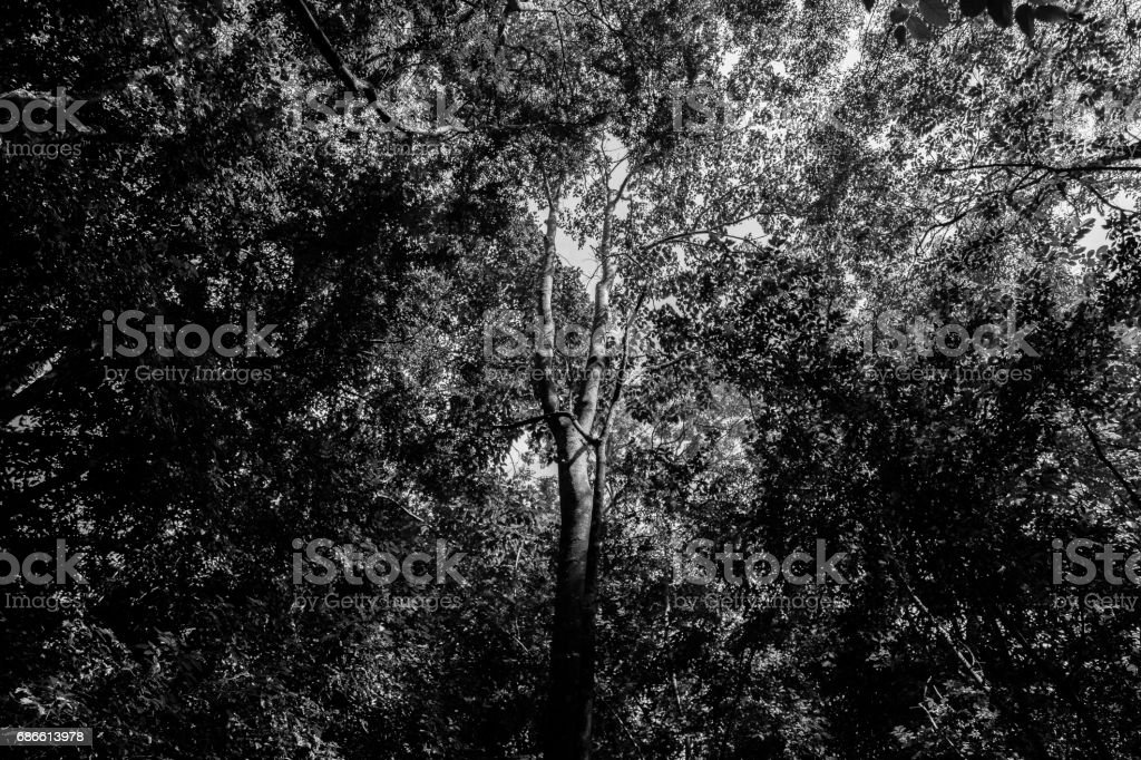 Darkness royalty-free stock photo