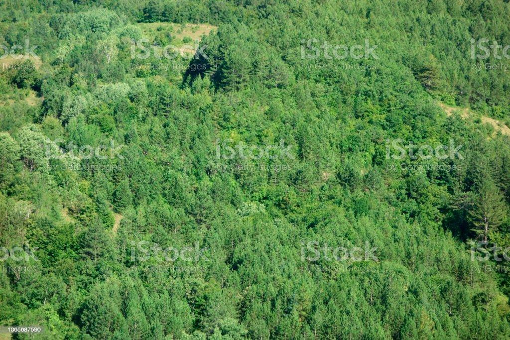 Das große Grün stock photo