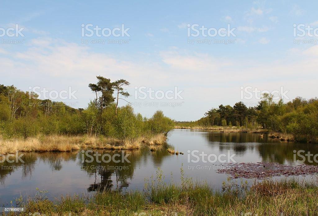 das Moor stock photo