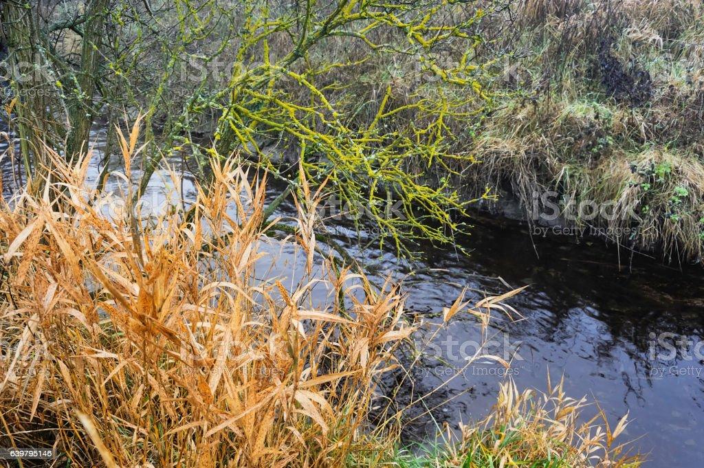 Das Ufer am kleinen Bach stock photo