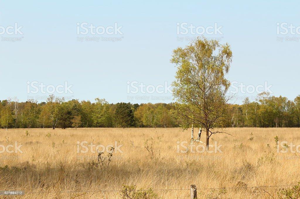 Das Venn stock photo