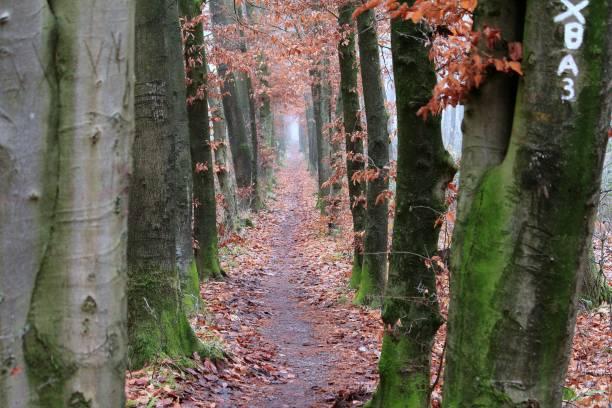 Das Ziel Schmaler Weg durch den Wald ziel stock pictures, royalty-free photos & images