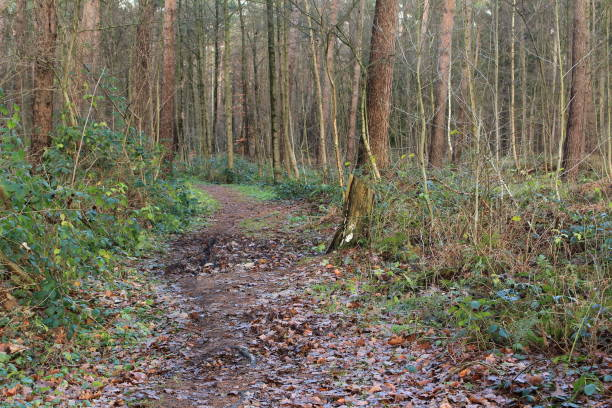 Das Ziel Weg durch den Wald ziel stock pictures, royalty-free photos & images
