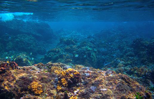 istock Dascillus fish in coral reef landscape. Tropical sea animal underwater photo. Coral reef seascape. Warm sea nature 1160439484