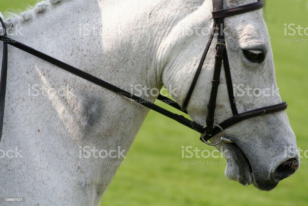 Dashing grey royalty-free stock photo