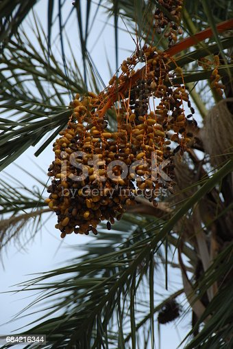 Dattelpalme In Spanien Stock Photo & More Pictures of Date - Fruit