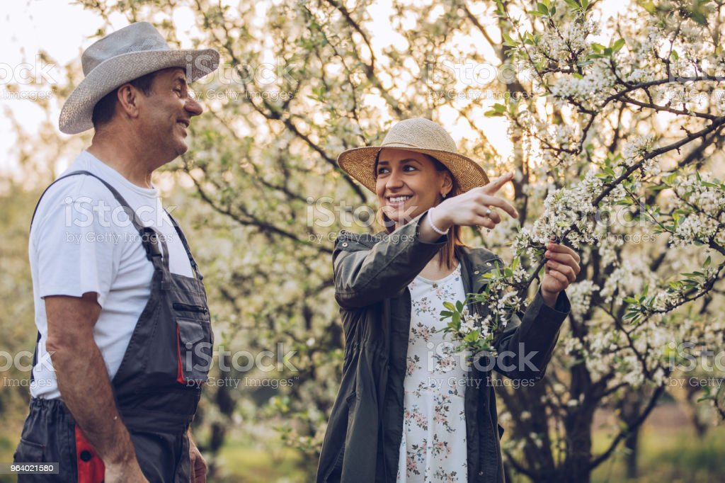 Daughter and dad in orchard - Royalty-free Active Seniors Stock Photo