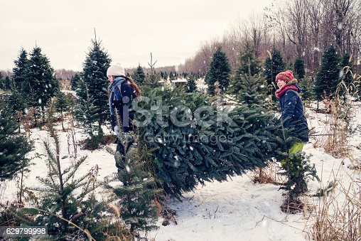Daughters are carrying the freshly cut Christmas tree outdoors in winter. A light snow is falling. Kids are 15 and 12 and are wearing wearing warm clothes. Horizontal full length outdoors shot with copy space. This was taken in Quebec, Canada.