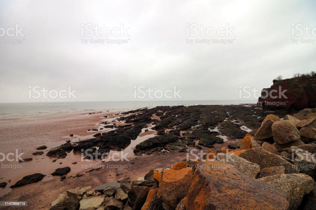 Dawlish Warren Beach - Royalty-free Animal Wildlife Stock Photo