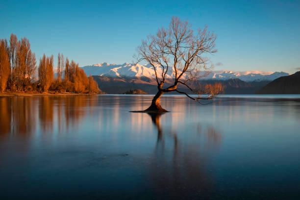 Dawn And The Tree At Lake Wanaka In New Zealand stock photo